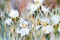 iris by Karen Knutson Watercolor Artists, Watercolor Flowers, Watercolor Paintings, Watercolours, Floral Paintings, Iris Art, Iris Painting, Art Aquarelle, Canvas Paper