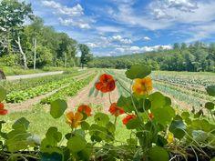 Brattleboro Vermont, Vineyard, Outdoor, Outdoors, Vine Yard, Vineyard Vines, Outdoor Games, The Great Outdoors
