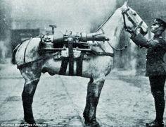 Image result for war horses