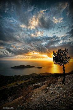 ΣΑΜΟΣ...The Tree, Samos, Greece / Photography By Nikos Chatziiakovou .....