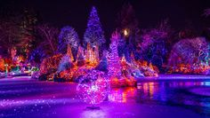 a bright vandusen christmas - More in my series of christmas light at the gardens. i was like a kid in a candy store shooting all the festive season light in the cold in Vancouver. yippee the christmas lights are here. Christmas Lights, Christmas Time, Merry Christmas, Xmas, Holiday, Christmas Cover Photo, Winter Time, Cover Photos, Places To Go