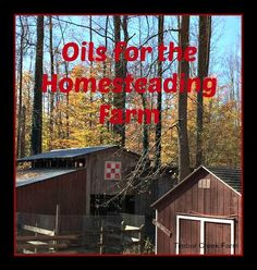 I have started using essential oils around the barnyard on our farm. It makes me feel good to use all natural, organic products to clean, disinfect or heal