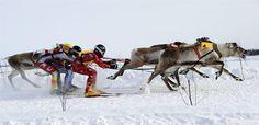 animations pendant le marché de noel, courses de rennes