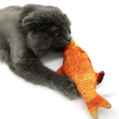MEW Tease Cat Toy Environmentally Friendly Cat Interactive Pet Toys Cat Mint Simulation Carp And * Find out extra by going to the photo link. (This is an affiliate link). Catnip Toys, Pet Toys, Stupid Cat, Kitten Toys, Fish Cat Toy, Fish Shapes, Animal Pillows, Carp, Cool Cats