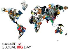 Get ready for the birds Global Big Day