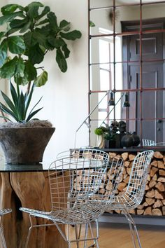Table w/tree trunk base + Bertoia chairs + vintage industrial window frame mirror + Fig plant = Incredible Organic Style Apartment Room, House Styles, Modern Room, Modern House, Burled Wood, Organic Modern, One Room Apartment, Room, Modern Dining Room