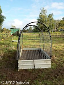 Garden bed with mesh to keep out goats and sheep and rabbits and bandicoots etc