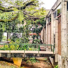 Clássicos da Arquitetura: Faculdade de Arquitetura e Urbanismo da UFBA / Diógenes Rebouças