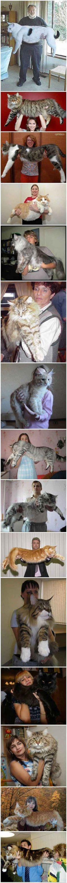 The league of extraodinary big cats