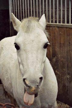 Horsey humor! #horse http://www.annabelchaffer.com/categories/Equestrian-Gifts/