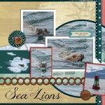 Disney Cruise Alaska Adventure # 14 – Juneau Sea Lions