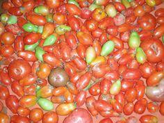 Barrage of Heirloom Tomatoes