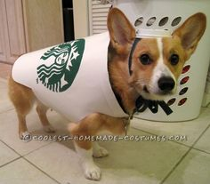 Starbucks Dog Costume - Easy and Inexpensive & 158 best Pet Halloween Costumes images on Pinterest | Homemade ...