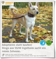 Der aufgeweckte Rüde Dingo aus dem Tierheim Ingelheim sucht ein Zuhause.   http://www.tierheimhelden.de/hund/tierheim-ingelheim/mischling/dingo/12702-0/  Dingo ist aufgeweckt, kennt die Grundkommandos und setzt sie auch zuverlässig  um. Manchmal ist er etwas hektisch, wenn man kurz wartet, entspannt er sich aber auch gut.