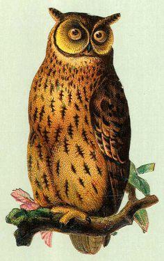 Vintage owl graphic