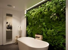 INTERIOR LIVING WALL | Sacred space to bathe - contemporary - bathroom - san francisco - Siol