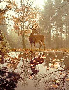 here deer, deer, deer :)
