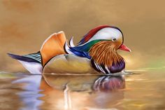 Mandarin Duck Cellars came about simply by evaluating nature and discovering the truest form of beauty in the wild – the Mandarin Duck. Description from mandarinduckcellars.com. I searched for this on bing.com/images