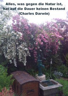 Alles, was gegen die Natur ist, hat auf Dauer keinen Bestand Charles Darwin, Plants, Mathematical Analysis, Happy Life, World, Quotes, Nature, Plant, Planets