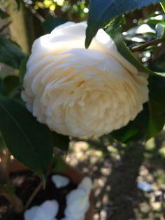Foto in My roses in June -