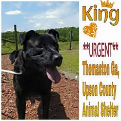 Running Out of Time - Can You Share With Rescues - Can You Foster - Please Share ♥ Thomaston Ga ~ Meet King, he is only a year old, very playful and energetic, King is in need of a adopter or immediate rescue.