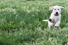 Grzebienie dla psów:  http://www.kakadu.pl/Akcesoria-do-piel%C4%99gnacji-dla-psow/grzebienie-dla-psow.html