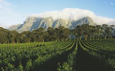It's 3 O'Clock in South Africa. An Insider's Guide to South Africa's Cape Winelands Oh The Places You'll Go, Places To Travel, Places To Visit, South African Wine, Wine Safari, Never Stop Exploring, Africa Travel, Vineyard, Wine Tasting