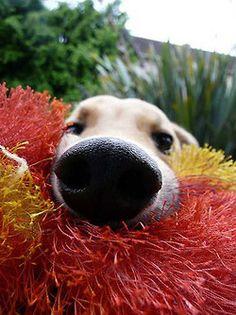 Doggie nose!
