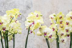 Moja orchidea bola suchá a nerodila žiadne kvety. Pomohol jej až tento trik s čiernym uhlím, vďaka ktorému je to najkrajší kvet v domácnosti | Babské Veci