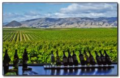 pictures of edna valley winery - Google Search