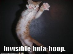 Google Image Result for http://icanhascheezburger.files.wordpress.com/2007/12/funny-pictures-invisible-hula-hoop-cat.jpg