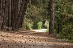 The Canon del Rio Lobos Nature Park , placed in Soria and Burgos #Pinares #CastillayLeon #Spain