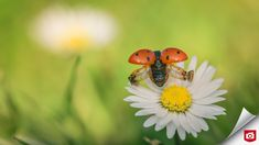 Insects, Zoom, Animals, Animaux, Animales, Animal, Dieren
