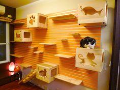 Compartilhar no WhatsAppQuem tem um gato em casa sabe o quanto eles adoram escalar móveis, quando estão bem acordados ou ficar em tocas bem escondidinhos nas sonecas diárias. Uma empresa chamada Catswall desenvolveu uma parede genial com módulos variados, para os momentos de diversão e de descanso dos gatinhos. O projeto é composto por caixas, …