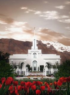 Mt. Timpanogos Temple with tulips