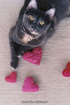 Any kitten will love to play with this DIY catnip-filled pillow. These handmade cat toys are also packed with wool stuffing and a jingle bell, keeping it plush and soft for play. #marthastewart #lifestyle #petcare #pets Valentine Love, Valentine Day Crafts, Happy Valentines Day, Valentine Hearts, Valentine Pillow, Easy Knitting Patterns, Knitting Projects, Knitting Ideas, Hat Patterns