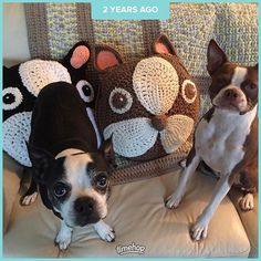 We've moved a few times I can't find those pillows that I made. #crochet #bostonterriersofinstagram #ilovemydog #redbostonterrier #bostonterrier #bostonterriersforever #instadog #dogsofig #bostonterrierlove #bostonterrierfinds #yarn #handmade #craft #ブヒ #愛犬 #ボストンテリア