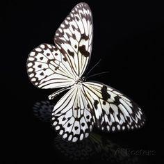 Butterfly Fotografie-Druck von Sean Justice bei AllPosters.de