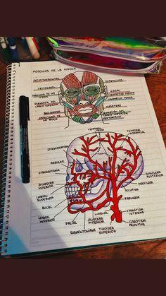 Medicine notes, Medicine studies, Nursing students, Medical school, Medical s. Nursing School Notes, Medical School, Dental Hygiene School, Medical College, Medical Students, Nursing Students, What Is Biology, Medicine Notes, Sketch Note