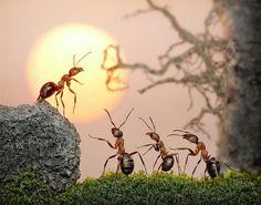 O fotógrafo russo Andrey Pavlov criou uma série de fotos que combinam micrografia, edição de imagem e certa dose de paciência para colocar várias formigas em posições bem curiosas.