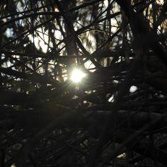 Sol entre branques Celestial, Outdoor, Sun, Photos, Outdoors, The Great Outdoors
