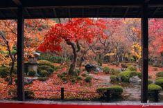 Autumn splendor at Enko-ji Temple, #Kyoto, #Japan