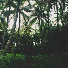 Jungle - jayalvarrez