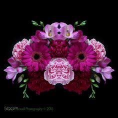Floral Pinks - Pink Flowers on a black background.