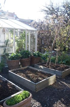 Kristel Kvants köksträdgård - All For Garden Starting A Vegetable Garden, Veg Garden, Vegetable Garden Design, Garden Cottage, Allotment Gardening, Organic Gardening, Back Gardens, Outdoor Gardens, Fukuoka