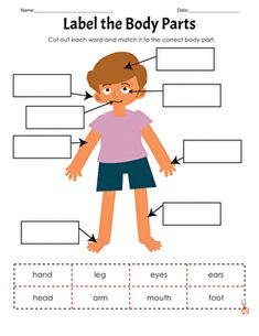 This worksheet will encourage students to practice reading skills while identifying their body parts. Kids will be asked to cut out body part words and then use them to label the parts of a body in a picture. Spelling Worksheets, 1st Grade Worksheets, Science Worksheets, Writing Worksheets, Worksheets For Kids, Kindergarten Worksheets, Kindergarten Science Activities, Kindergarten Special Education, Kindergarten Reading