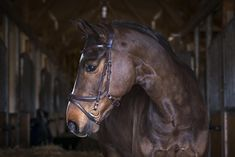 PS Of Sweden Jump Off Bridle Revolution in Brown