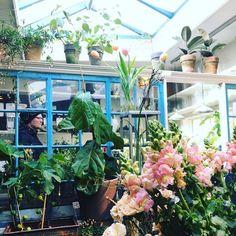My favorite flowershop  @blomsterskuret  Her finder du vores frøæske  #urbangardencompany #urbangarden #dyrkbyen #baghave #hyggehave #værnedamsvej #copenhagen