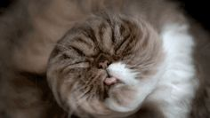 Funny Portraits Of Cats Shaking Themselves Dry By Carli Davidson | Bored Panda