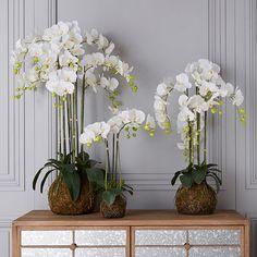 A large artficial white orchid with a planted bulb base and faux moss. Fake Flower Arrangements, Ikebana Flower Arrangement, Ikebana Arrangements, Luxury Flowers, Fake Flowers, Summer Flowers, House Plants Decor, Plant Decor, Faux Plants